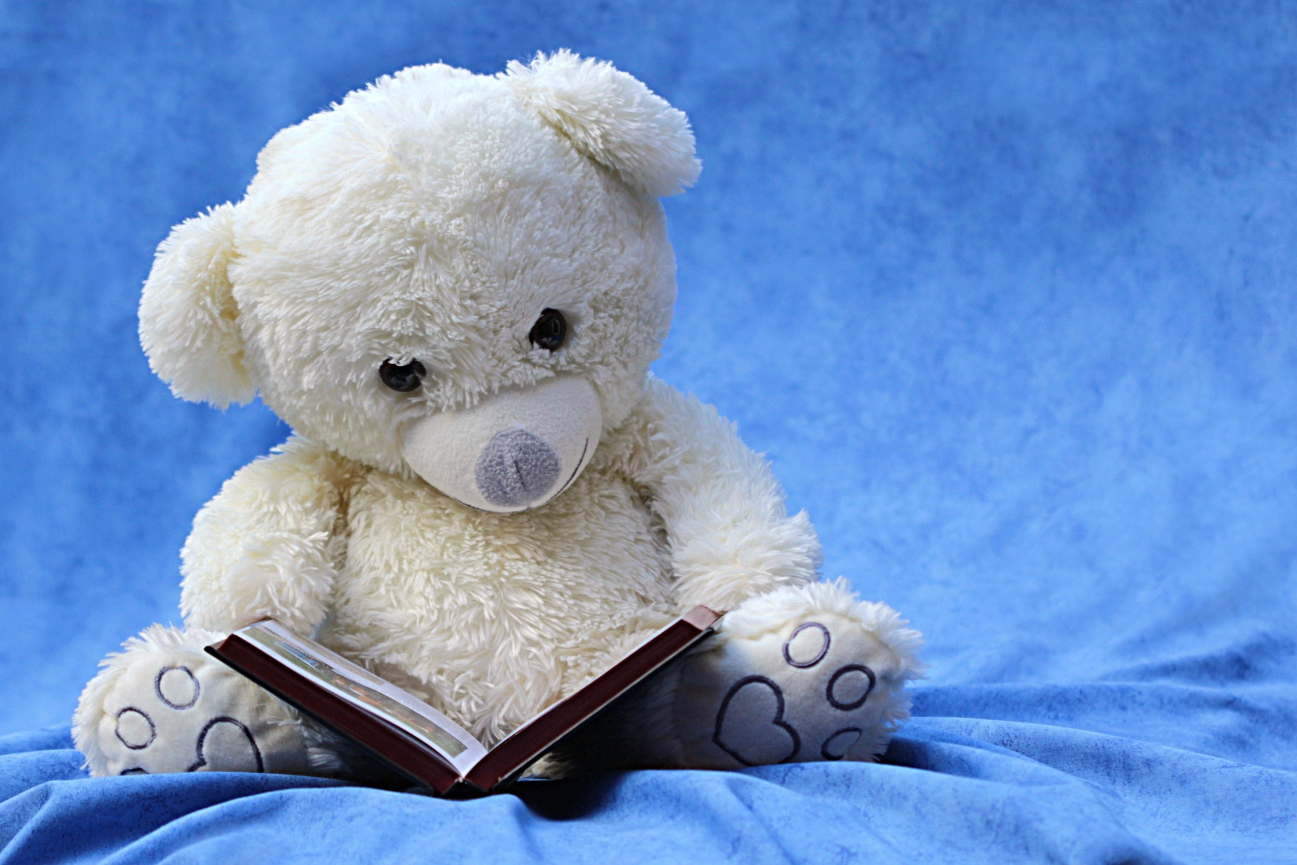 Bear stuffie reading book